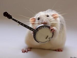 Rat-Band-06-634x476