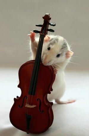 Rat-Band-07-634x967