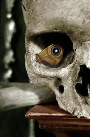 butterfly-skull