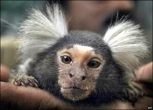 _41940600_monkey_ap416