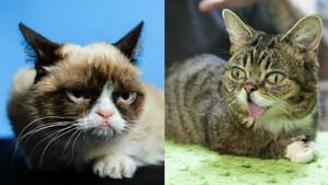 grumpycat_lilbub