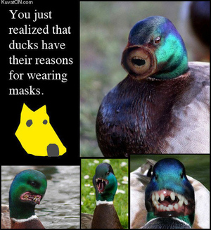 why-ducks-wear-dog-masks