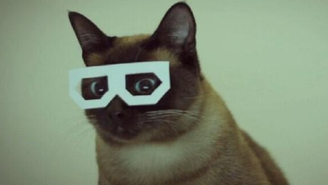 _69790801_cat