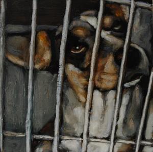 shelterdogs05