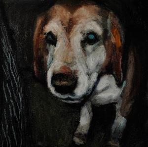 shelterdogs06