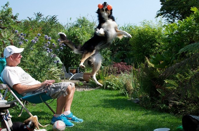 Kennel-Club-Photo-Contest-Winners-Dogs-at-Play-685x453