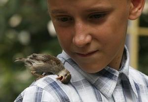 boyandsparrow001-3