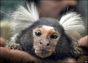 41940600_monkey_ap416