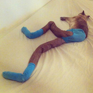 Cats-wearing-tights-6