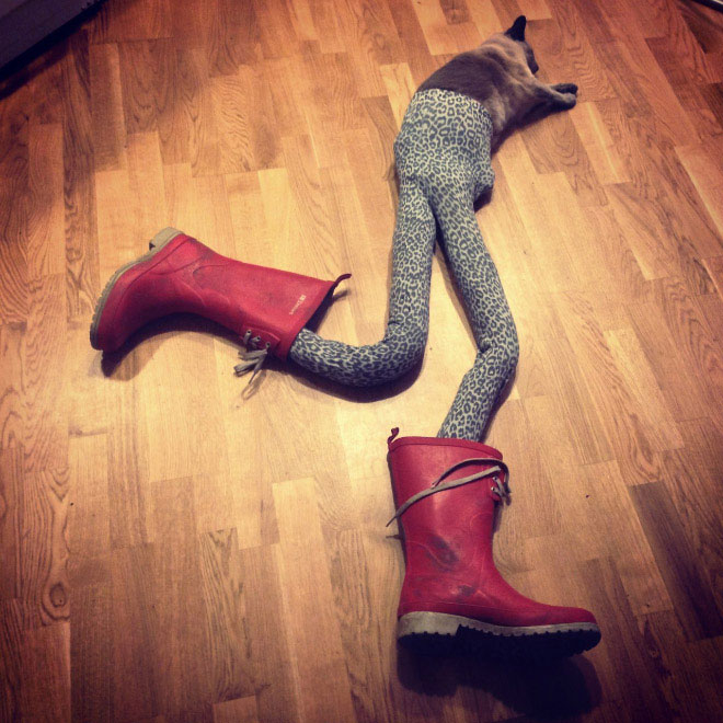 Cats-wearing-tights-8
