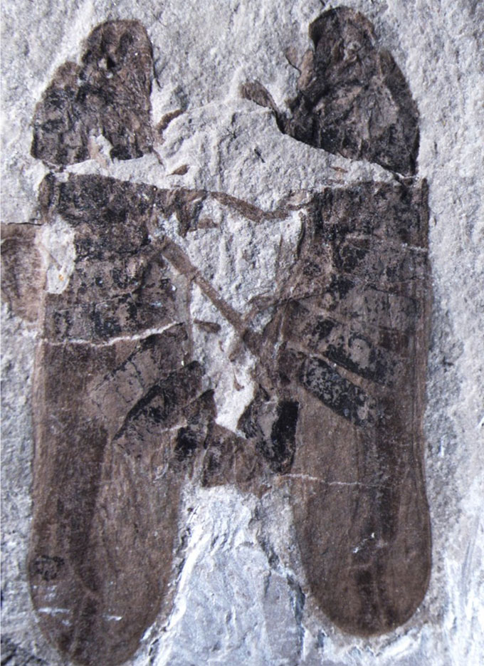 Two-bugs-that-have-been-having-sex-for-165-million-years