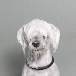 wet-dog-07-685x685