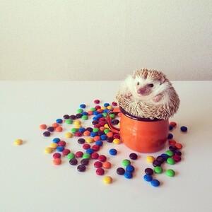 darcytheflyinghedgehog14