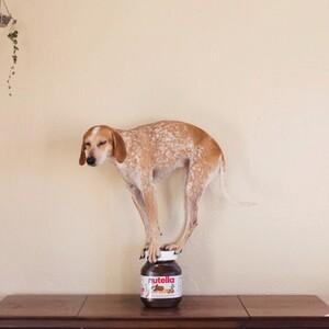 maddie-the-coonhound-10-685x685