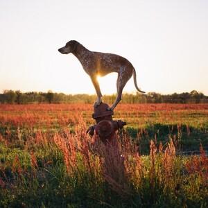 maddie-the-coonhound-2-685x685