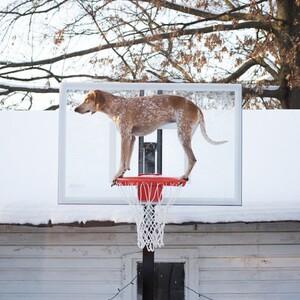 maddie-the-coonhound-7-685x685