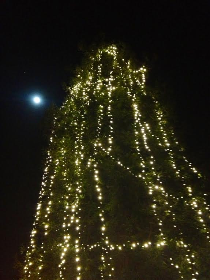 treerath