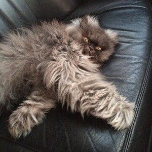 Colonel-Meow-in-the-Car-640x640
