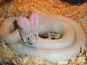 Bunny-Snake