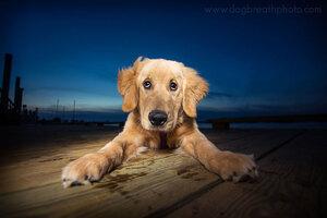 dogs-dog-breath-photography-kaylee-greer-13