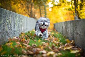 dogs-dog-breath-photography-kaylee-greer-14