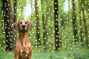 dogs-dog-breath-photography-kaylee-greer-19