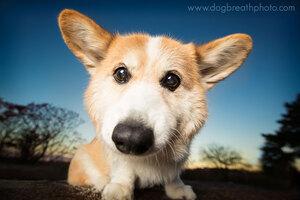dogs-dog-breath-photography-kaylee-greer-20