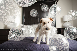 dogs-dog-breath-photography-kaylee-greer-23