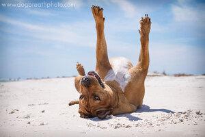 dogs-dog-breath-photography-kaylee-greer-27