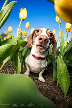 dogs-dog-breath-photography-kaylee-greer-44