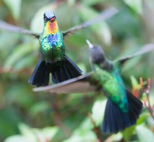 hummingbird-3-650x601