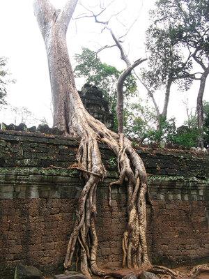 tree-roots-concrete-pavement-15