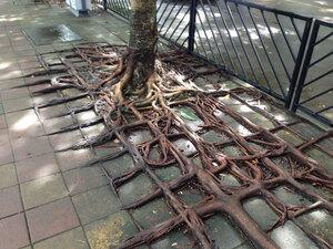 tree-roots-concrete-pavement-4