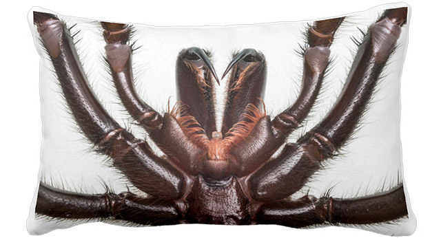Spider-Fangs-Pillow