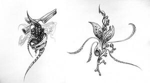 birdsketches