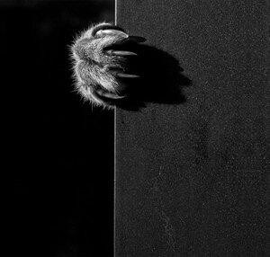 cat-black-and-white-photography-28
