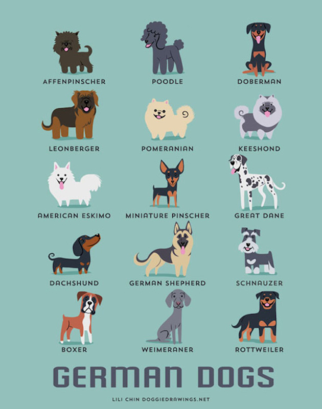 Illustrated-Guide-to-Dogs-of-the-World-10