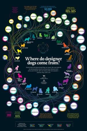 designerdogs