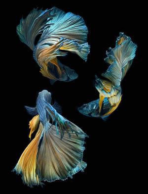 fish-9