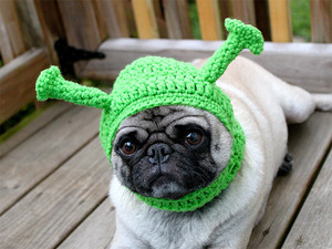 silly-hat-pug13