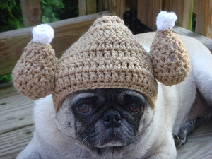 silly-hat-pug15