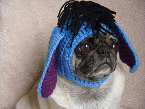 silly-hat-pug3