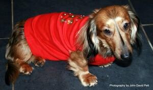 Doggy Xmas 2014 1-3