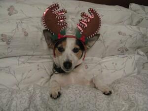 Stella at Christmas-1