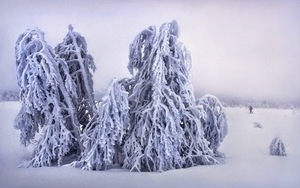 Frozen-Trees-Photography-0