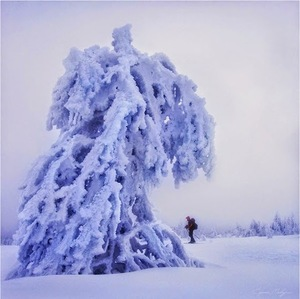 Frozen-Trees-Photography-3