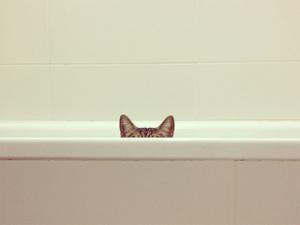 cat-ninja13