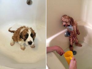 wet-dog15