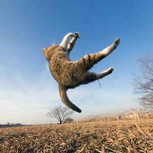 space-cat11