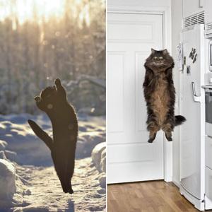 space-cat16